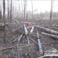 Неподалік Новограда-Волинського майстер лісу затримав чоловіка, який намагався вкрасти деревину