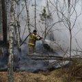 В Житомирській області ОТГ обіцяє винагороду за інформацію про осіб, які здійснили підпал лісу