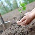 На Житомирщині на місці спаленого лісу планують висадити нові дерева