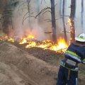 У Житомирській області спалахнула нова лісова пожежа