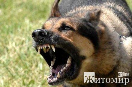 У двох жителів Житомирської області суди конфіскували собак, бо ті покусали людей