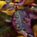 Дощі і грози. Погода на травневі вихідні ускладниться