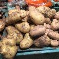"""У Житомирі вже продають """"молоду"""" картоплю. ФОТО"""