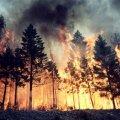 За 4 місяці на Житомирщині сталося стільки ж пожеж, як за весь минулий рік