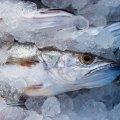Як правильно вибрати заморожену рибу в магазині: 10 секретів