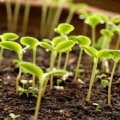 Застосування перекису водню на городі, щоб захистити рослини від хвороб та шкідників