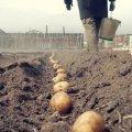 Житомирянина, який виклав у мережу пост про про складання протоколів на людей без масок, які садять картоплю, викликали до поліції