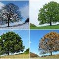 Синоптики зробили прогноз погоди на літо