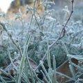 Синоптики попереджають про заморозки