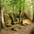 Унікальне село на Житомирщині: чахне вся рослинність, а у людей погіршується самопочуття.ФОТО