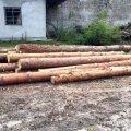 За 4 сосни на лісівників із Житомирщини мало не напало село з Рівненщини