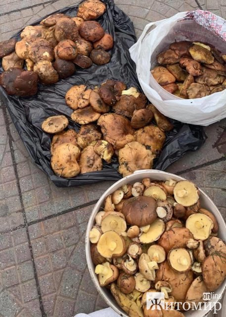 У Житомирі на базарі вже почали продавати гриби. ФОТО