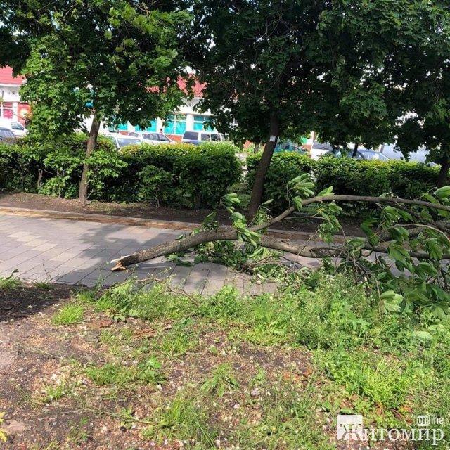 Через сильний вітер у Житомирі біля скверу на Лятошинського зламалася велика гілка. ФОТО