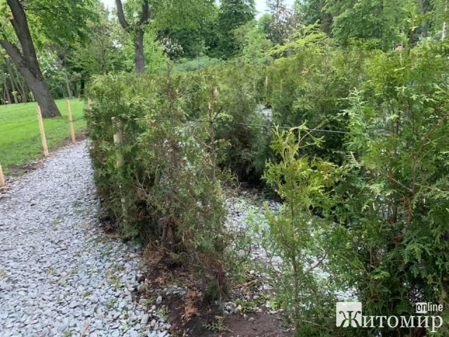 """Всохлі дерева та ніяка огорожа - у житомирському КП """"Парк"""" повідомили, що зелений лабіринт готовий до роботи"""