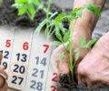 Посівний календар на червень 2020 року. У які дні краще садити, щоб гарно вродило