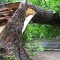 Неподалік Житомира через негоду дерево впало на лінії електропередач та перекрило рух транспорту