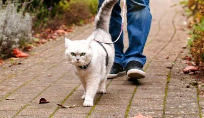 Кот-поводырь
