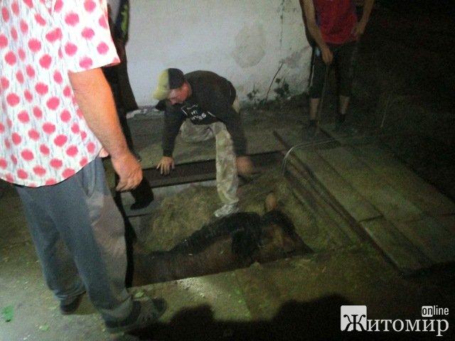 У селі Житомирської області кінь провадився в яму на території льонзаводу. ФОТО