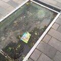 "Сумна та невесела картина перед входом до житомирського кафе ""Байрон"". ФОТО"