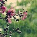 Погода в Житомирі на 2 червня