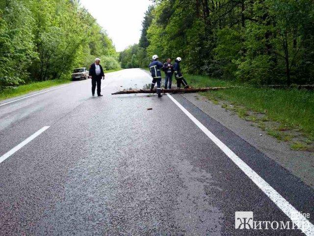 Через складні погодні умови в Житомирській області на дорогу впала сосна та перекрила рух транспорту. ФОТО