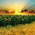 Новая схема: у украинцев массово забирают землю