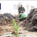 На Житомирщині на місці лісової пожежі висадили тисячу сіянців сосни