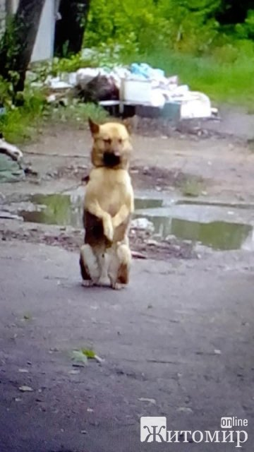 Житель Житомирщини шукає людей, які б могли доглядати за тваринами, якими опікувався його брат