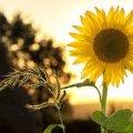 Синоптики прогнозують у Житомирі літню спеку та грози