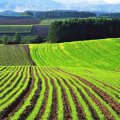 З 10 червня реєстрація земельних ділянок відбуватиметься за екстериторіальним принципом