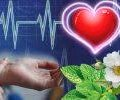 Відвари з трав, які допоможуть впоратися з тахікардією