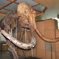 Скелет мамонта та портрет Мікеланджело: що цікавого є в Житомирі