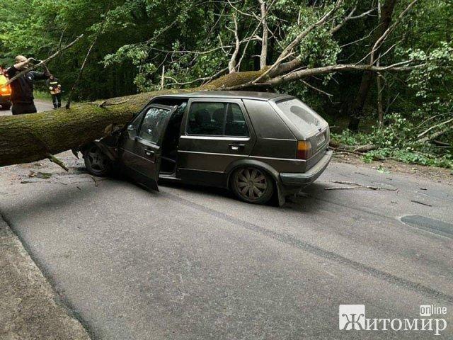 Зранку поблизу Житомира на автомобіль впало дерево. ФОТО