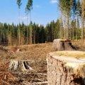 На Житомирщині з лісничого, який організував незаконну вирубку дерев, хочуть стягнути більше 15 мільйонів
