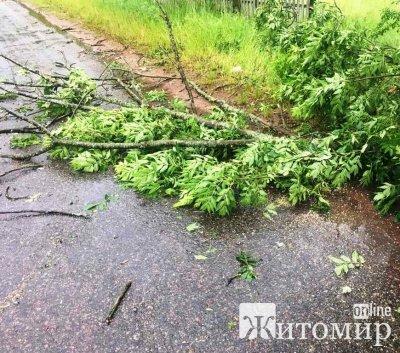 Житомирська область: рятувальники ліквідовують наслідки негоди