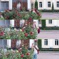 """У Житомирі з клумб біля ОДА """"романтик"""" рвав троянди. ФОТО"""