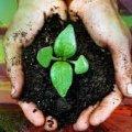 Житомирська місцева прокуратура заявила позов про нецільове використання земель лісового фонду вартістю майже 13 млн грн, що у селі Довжик