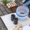 """В Житомирі на """"Житньому ринку"""" почали продавати літні смаколики. ФОТО"""
