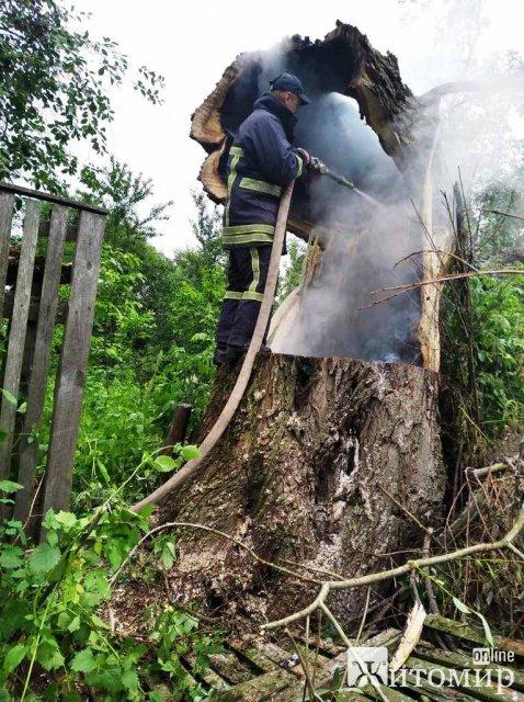 На Житомирщині після негоди рятувальники прибирали повалені дерева та гасили займання від блискавки. ФОТО