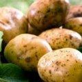 Секрети вибору картоплі
