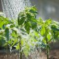 Через дощі житомиряни не будуть платити за полив городів у червні