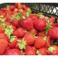 Останні новини із Житнього ринку: практично немає полуниць