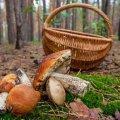 У Житомирські області жінка отруїлася грибами. ВІДЕО