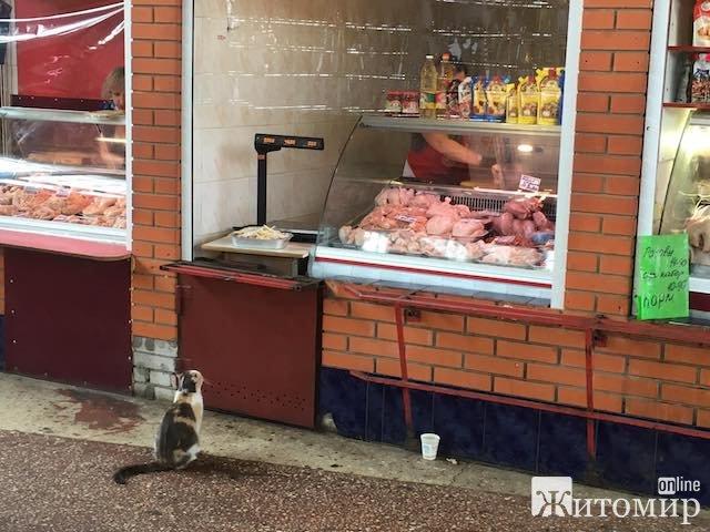 Знайомтесь, це Іриска з Житнього ринку у Житомирі. ФОТО