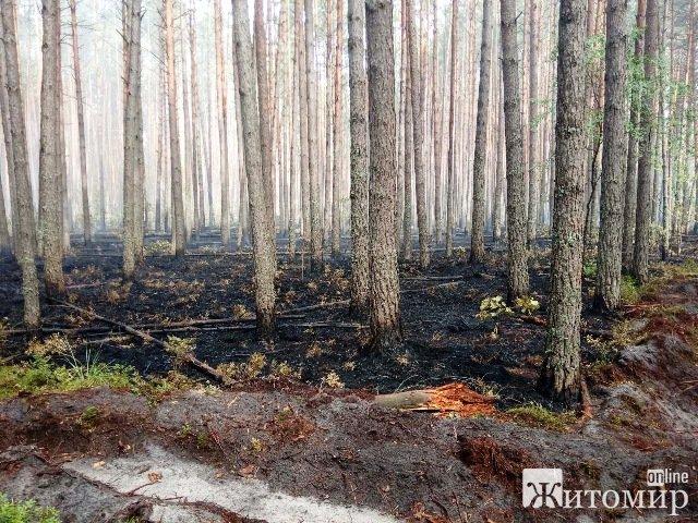 На Житомирщині рятувальники з ранцевими оприскувачами допомагали лісівникам ліквідувати займання. ФОТО