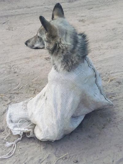 На Житомирщині нелюди знущаються над тваринами. ФОТО