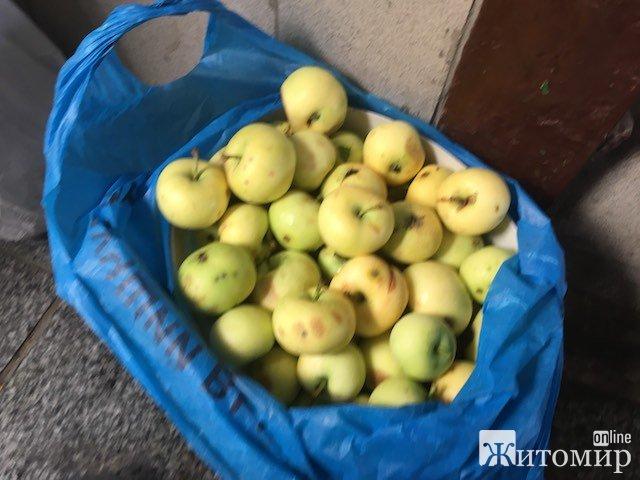 У Житомирі з'явилися в продажу перші ранні яблука. ФОТО