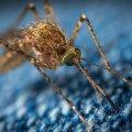 Комарі та коронавірус: яку загрозу несуть комахи для людини