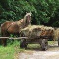 У Житомирській області селянин упав з воза та потрапив під колеса, від отриманих травм чоловік загинув