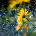Спека до +38 та зливи з грозами: погода на тиждень